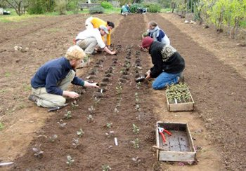 Government Grants For Organic Farming