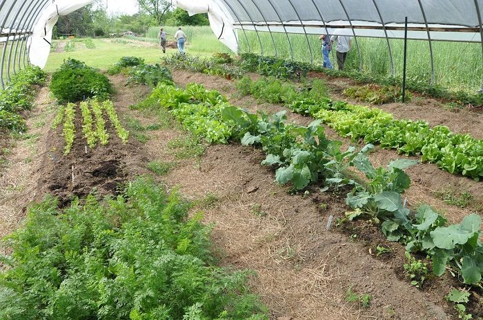 Government Grants For Organic Farming: Tips To Get The Grants