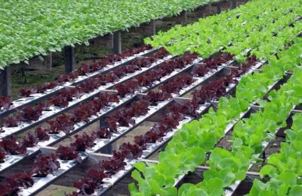 Grants For Hydroponic Farming