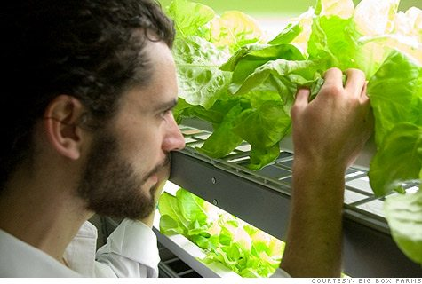 Grants For Hydroponic Farming