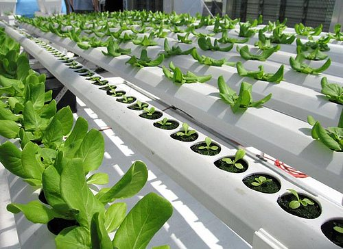 Grants For Hydroponic Farming1 How To Find Grants For Hydroponic Farming