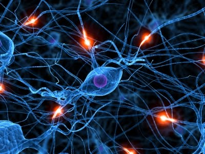 Neuroscience Research Grants