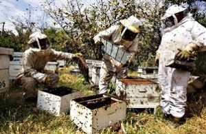 Grants for Beekeeping