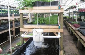 Agriculture Grants for Aquaponics