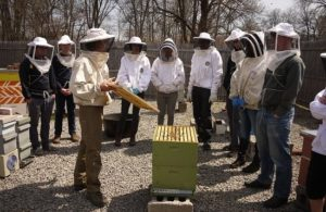 Grants for Starting an Apiary