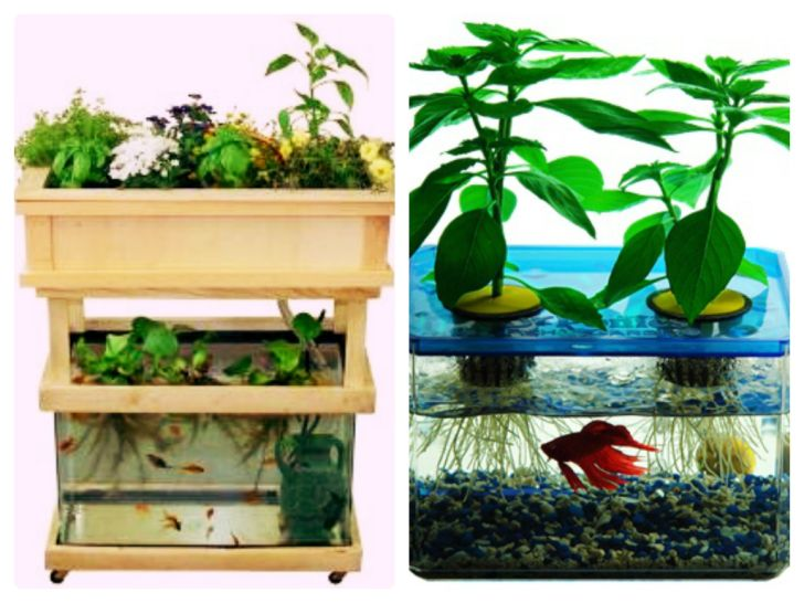 Federal Grant Money for Aquaponics