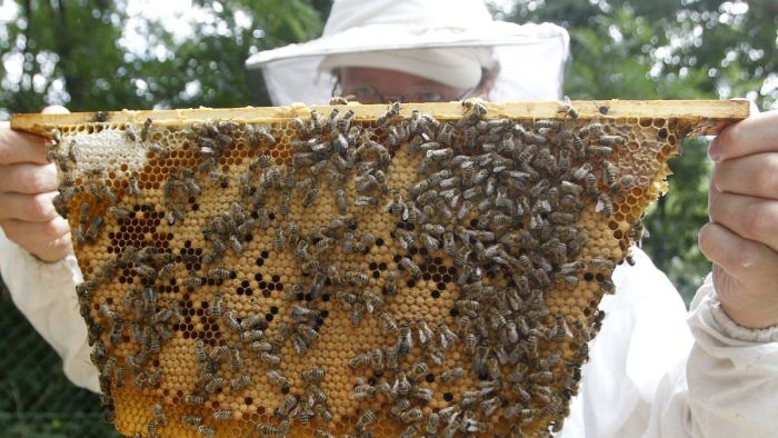 Grants for Raising Honey Bees