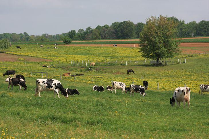Wondering What Beginning Farmer and Rancher Development Program is?