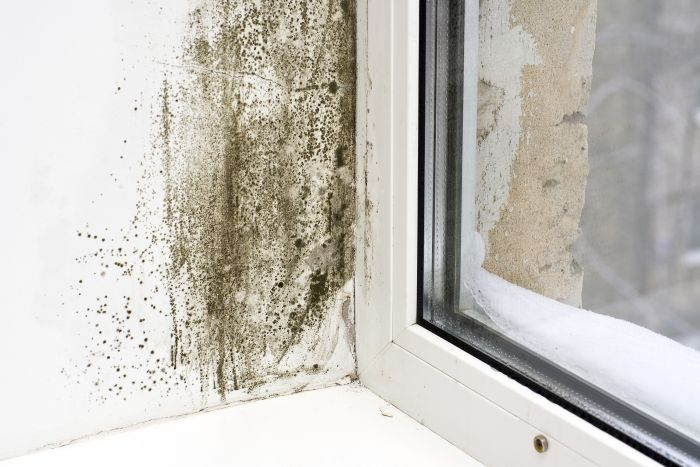 Government Grants for Homeowners with Mold