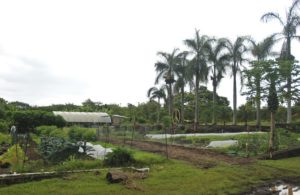 Agriculture Grants Hawaii