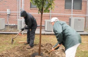 Grants for Planting Trees