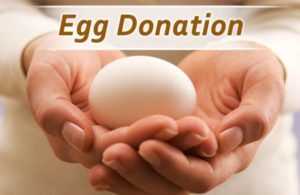 How Much Do You Get For Donating Eggs