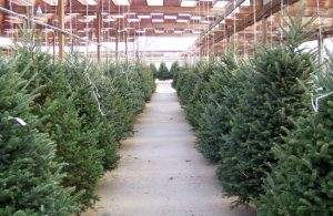 Free Christmas Trees For Low Income Families