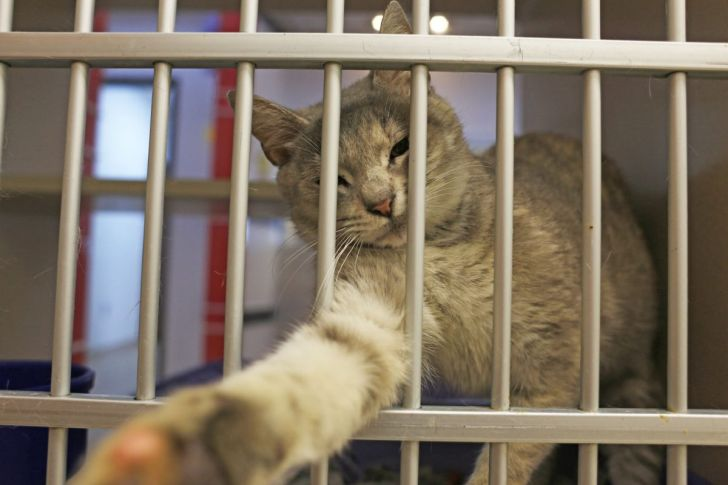 brownsville animal shelter